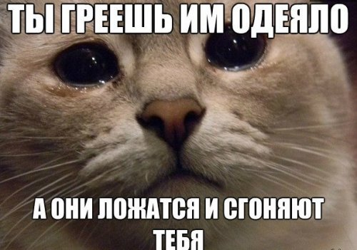 Смешные фото приколы с надписями ...: dusc.ru/fun/1619-smeshnye-foto-prikoly-s-nadpisyami-oktyabr-5.html