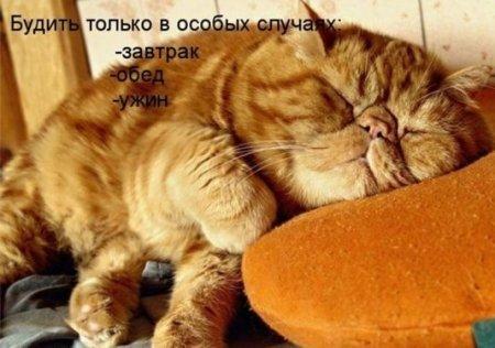 http://dusc.ru/uploads/posts/2013-10/1381353816_zhivotnye-s-nadpisyami-1.jpg