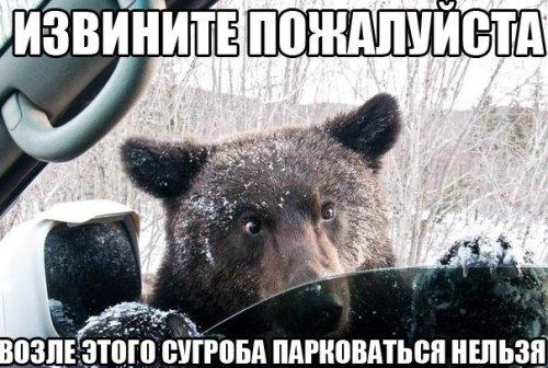 http://dusc.ru/uploads/posts/2013-10/1382076982_fotoprikol-5.jpg