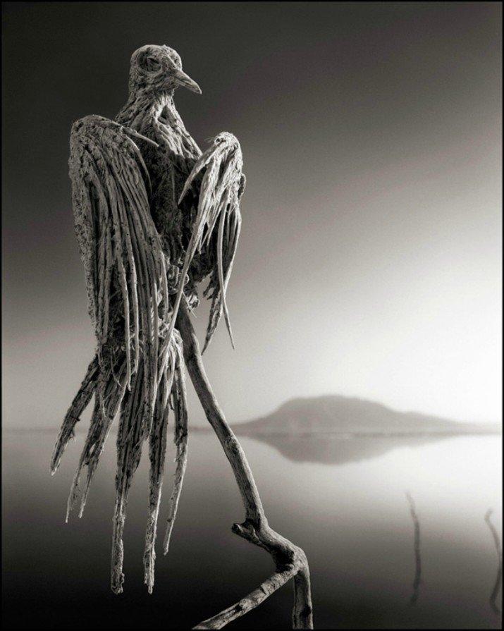 Прикольные фотографии птицы мумии