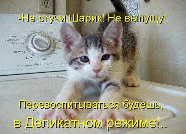 http://dusc.ru/uploads/posts/2013-10/1383147073_prikolnye-koty-i-sobaki-15.jpg
