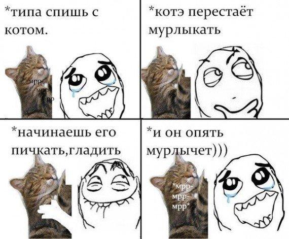 Мем комиксы про коте
