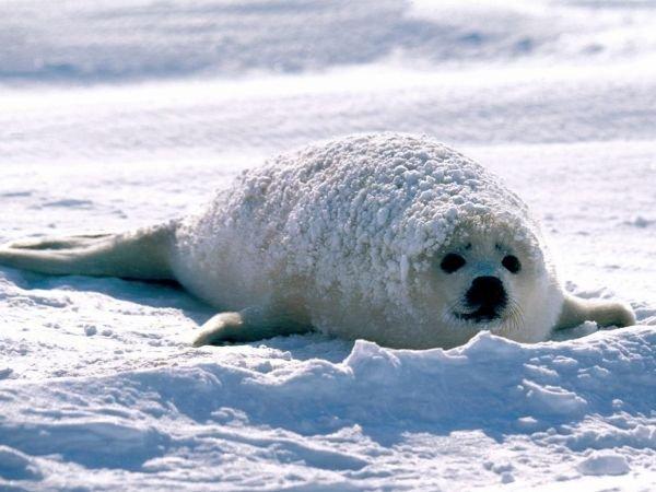 Животные зимой 2