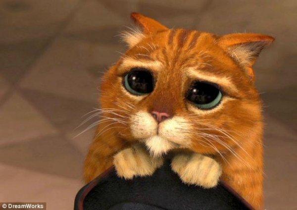 фото грустных котиков