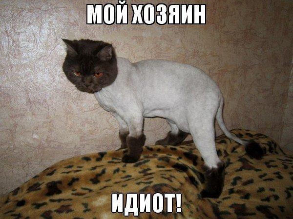 картинки приколы с котятами: